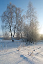 Winter landscape with snow Royalty Free Stock Photos