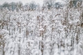 Winter landscape with snow covered plants and trees. Small depth of field for enhancing effect. Winter scene . Frozen flowers