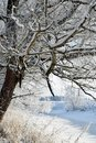 Winter landscape. Snow covered tree branches and plants. Small frozen river in the middle. Royalty Free Stock Photo