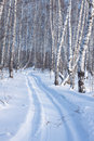 Winter landscape of snow-covered trees Stock Images