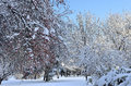 Winter landscape with snow covered trees sunny day and blue sky in the foreground is apple tree lots of red fruits Royalty Free Stock Photo