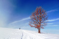 Winter landscape with solitary tree and person walking a red Royalty Free Stock Images