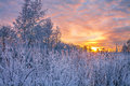 Winter landscape with sunset in the forest Royalty Free Stock Images