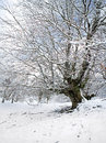 Winter landscape with tree and frozen branches a Royalty Free Stock Image