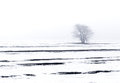 Winter landscape tree seasonal nature white image with lonely unique in a misty snow plain solitude concept can be used as a Royalty Free Stock Images