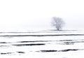 Winter landscape tree