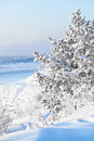 Winter landscape with a tree in the snow Royalty Free Stock Photos