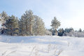 Winter landscape with trees hoarfrost covered Royalty Free Stock Photos
