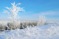 Winter landscape with trees hoarfrost covered Stock Photos