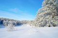 Winter landscape with trees pines hoarfrost covered Stock Images