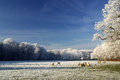 Winter landscape with trees and sheep a photo of a Royalty Free Stock Photography