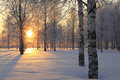 Winter Landscape With White Bi...