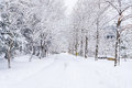Winter landscape white snow of Mountain in Korea. Royalty Free Stock Photo