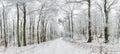 Winter Landscape. Winter Road ...