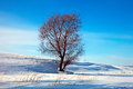 Winter lanscape with single tree Royalty Free Stock Photography