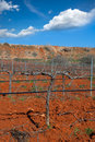 Winter leafless vineyard field in utiel requena spain of valencia Stock Photography