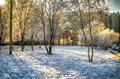 Winter light creates wonderful color and shade in nature peredelkino moscow region russia Royalty Free Stock Photo