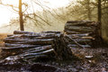 Winter logs piles of at sunrise on a cold day with snow in the air at the posbank in the netherlands Royalty Free Stock Photos