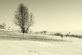 Winter lonely tree Royalty Free Stock Photography