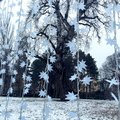 Winter magics and flakes Royalty Free Stock Photo