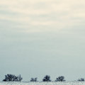 Winter minimalist landscape the field is covered with snow on t horizon trees and bushes toning Royalty Free Stock Photos
