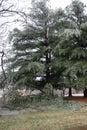 Winter in Missouri 2021 III Royalty Free Stock Photo