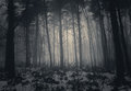 Winter misty forest with fog Royalty Free Stock Photo