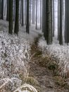 Winter misty forest Royalty Free Stock Photo