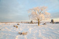Winter morning with a frosty tree Royalty Free Stock Photo
