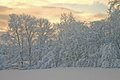 Winter Morning Glow Stock Photography
