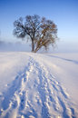 Winter morning landscape with snow and lonely tree in fog Royalty Free Stock Photos