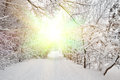 Winter morning the morning sun shines in the park Royalty Free Stock Photos