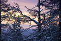 Winter morning / sunlight and trees silhouettes Royalty Free Stock Photo