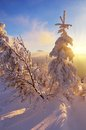Winter in the mountains beautiful sunshine on a evening a mountain valley carpathians ukraine Royalty Free Stock Images