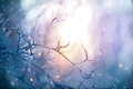 Winter nature. Christmas holiday background Royalty Free Stock Photo