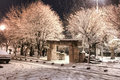 Winter night city park in Royalty Free Stock Photography