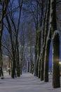 Winter In The Night City
