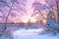 Winter night landscape with sunset in the forest Royalty Free Stock Photo