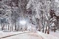 Winter night landscape- winter alley in the park with winter frosty trees and shining lanterns Royalty Free Stock Photo