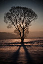 Winter night with leaf less tree Royalty Free Stock Photos