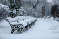Winter in the park, December time Royalty Free Stock Photo