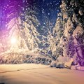 Winter park in snow. fantastic wintry landscape. frosty evening in city park. snow covered trees glowing in light lantern. Royalty Free Stock Photo