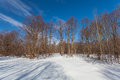 The winter park with snow and shadows from trees Royalty Free Stock Images