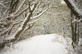 Winter path covered in snow Royalty Free Stock Photo