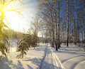 Winter path in the forest with sun at sunset Stock Photos