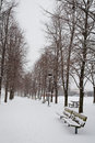 Winter path in the park a lined with benches and trees covered snow image orientation is vertical and there is copy space Stock Image