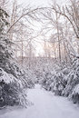 Winter path snow covered through an alaskan forest with a pink glow of sunset Royalty Free Stock Image