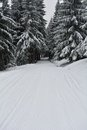 Winter path snowy forest for skiers Royalty Free Stock Image