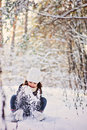 Winter portrait of cute happy child girl in grey fur coat plays with snow in forest