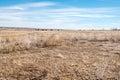 Image : Winter on the Prairie  barking northern